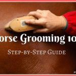 Guide to Horse Grooming 101: Step-by-Step Guide [Infographic]