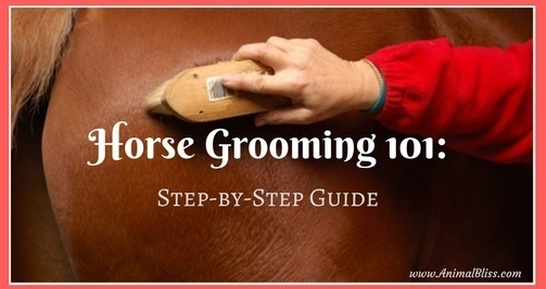 Guide to Horse Grooming 101: Step-by-Step Guide