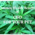 7 Most Common Health Benefits of CBD for Your Pet