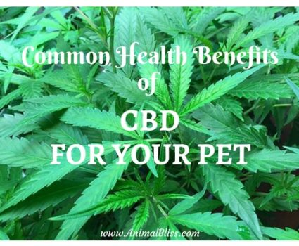 Cannabis has entered the pet market, delivering some incredible health benefits of CBD for your pet. If your pet is suffering from any variety of ailments, such as cancer and hip dysplasia, or anxiety due to loud noises or crowds, CBD might be something you should consider researching further.