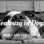 Most Frequent Signs of Jealousy in Dogs