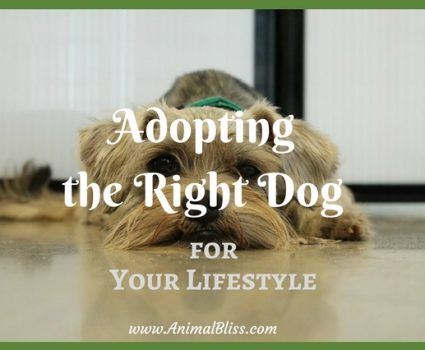 Adopting the Right Dog for Your Lifestyle