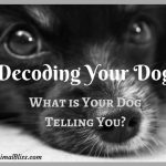 Decoding Your Dog: What is Your Dog Telling You? [Infographic]