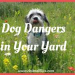 Dog Dangers in Your Yard – Backyard Pet Hazards