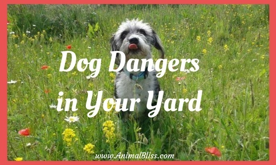 Dog Dangers in Your Yard