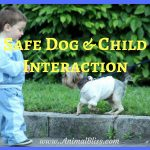 Keeping Dog and Child Interactions Safe – Dog Safety