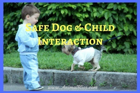 Keeping Dog and Child Interactions Safe