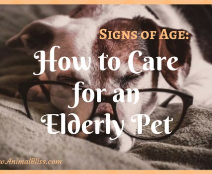 Signs of Age: How to Care for an Elderly Pet