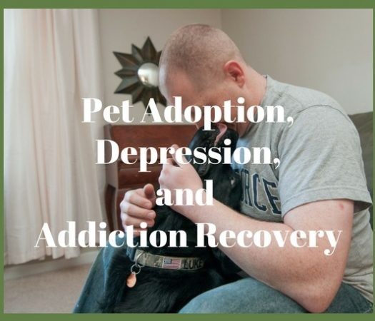 Pet adoption and depression or addiction recovery often go hand in hand. Not only are you giving the rescue animal a new lease on life and a forever home, but the companionship this pet can provideyou with offers a new sense of purpose and uplifting feeling that no other form of therapy can afford.