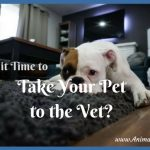 What's That, Boy? 4 Signs it's Time to Take Your Pet to the Vet