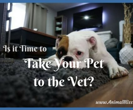 Do you know when it's time to take your pet to the vet? Here are a few situations that should prompt you to take action to ensure your pet has the best of care.