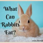 What Can Rabbits Eat? Comprehensive List of Proper Rabbit Food