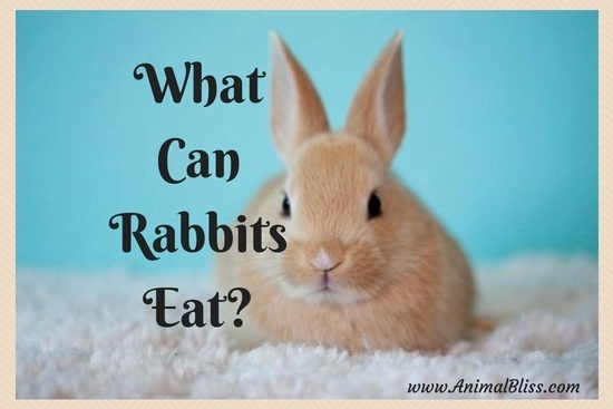 What can rabbits eat? Following is a link to a comprehensive list of 100+ food that a rabbit can and cannot eat to stay healthy and happy.