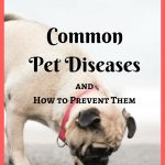 Common Pet Diseases – How to Prevent Them (Infographic)