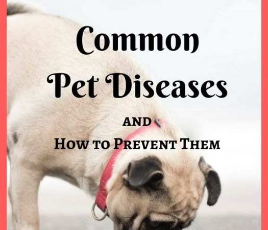 Common Pet Diseases and How to Prevent Them