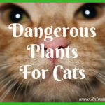 Dangerous Plants For Cats: Your Cat and Poisonous Plants