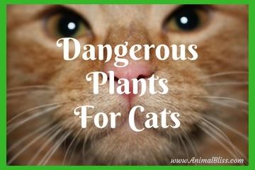 Dangerous Plants for Cats - Your Cats and Poisonous PLants