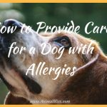 How to Provide Care for a Dog with Allergies
