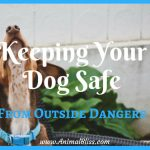 Keeping Your Dog Safe From Outside Dangers