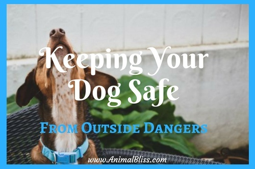 Keeping your dog safe from outside dangers and harm is very important.