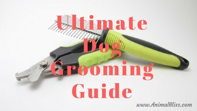 Ultimate Dog Grooming Guide