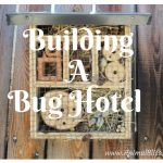 Building A Bug Hotel DIY (Infographic) Attracting Insects