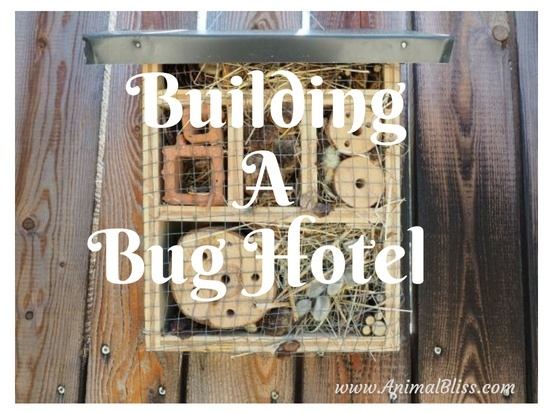Building A Bug Hotel DIY (How-to Infographic)