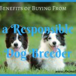 Benefits of Buying from a Responsible Dog Breeder
