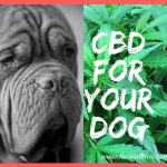 CBD For Your Dog – Important Things You Should Know