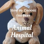 Steps to Help You Choose the Best Animal Hospital