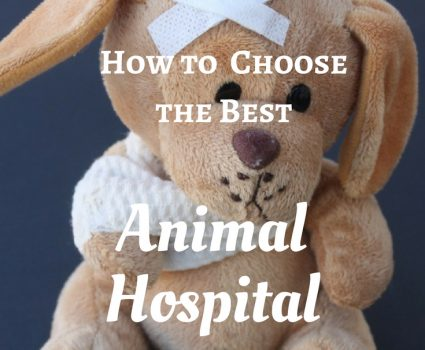 How to Choose the Best Animal Hospital