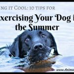 Keeping it Cool: 10 Tips for Exercising Your Dog in the Summer
