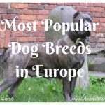 Most Popular Dog Breeds in Europe – Some May Surprise You