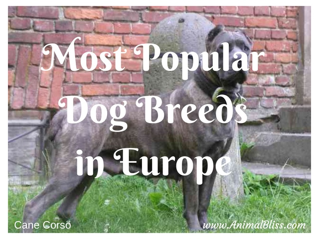 Most Popular Dog Breeds in Europe