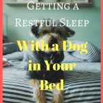 4 Tips for Getting a Restful Sleep With a Dog in Your Bed