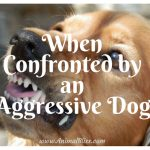 How to Stay Safe When Confronted by an Aggressive Dog