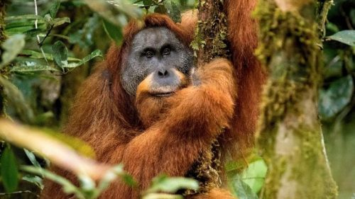 Top 5 New Animals Species Discovered 2018