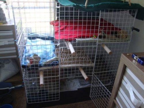 How to Build an Indoor Rabbit Enclosure