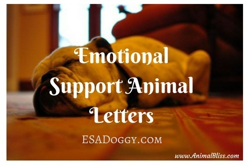 Emotional Support Animal Letters - ESADoggy