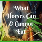 What Horses Can and Cannot Eat – Infographic