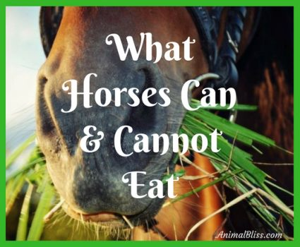 What Horses Can and Cannot Eat - Infographic
