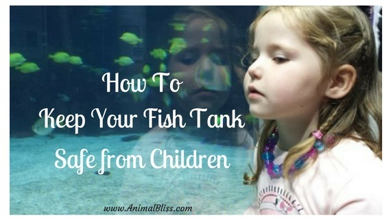 How to keep your fish tank safe from children and not posing a danger to them should be a simple case of common sense, education, and supervision.