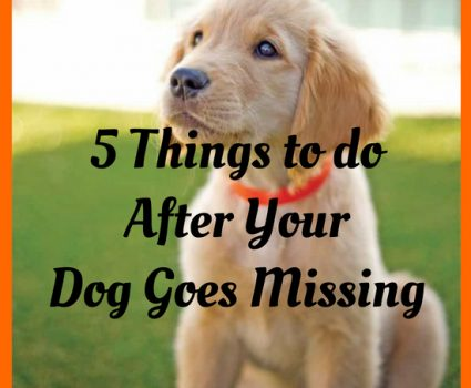 5 Things to do After Your Dog Goes Missing