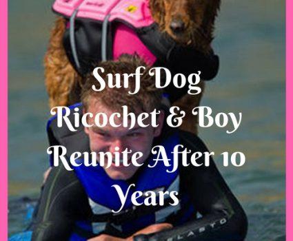 Surf Dog Ricochet Reunited with Quadriplegic Boy after 10 Years