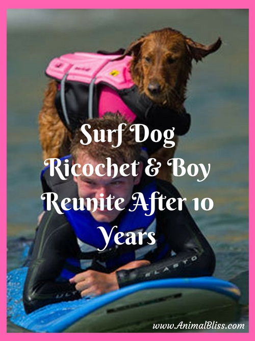 Surf Dog Ricochet Reunited with Quadriplegic Boy after 10 Years