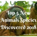 Top 5 New Animal Species Discovered 2018
