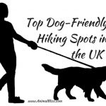 Top Dog Friendly Hiking Spots in the UK – Infographic