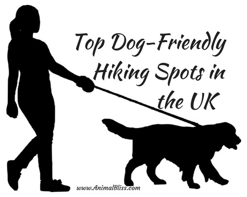 Top Dog Friendly Hiking Spots in the UK - Infographic