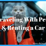 Traveling with Pets and Renting a Car, What You Need to Know