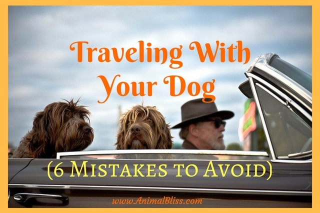 6 Mistakes to Avoid When Traveling With Your Dog